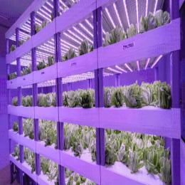 中科三安、京东等国内20家植物工厂大盘点
